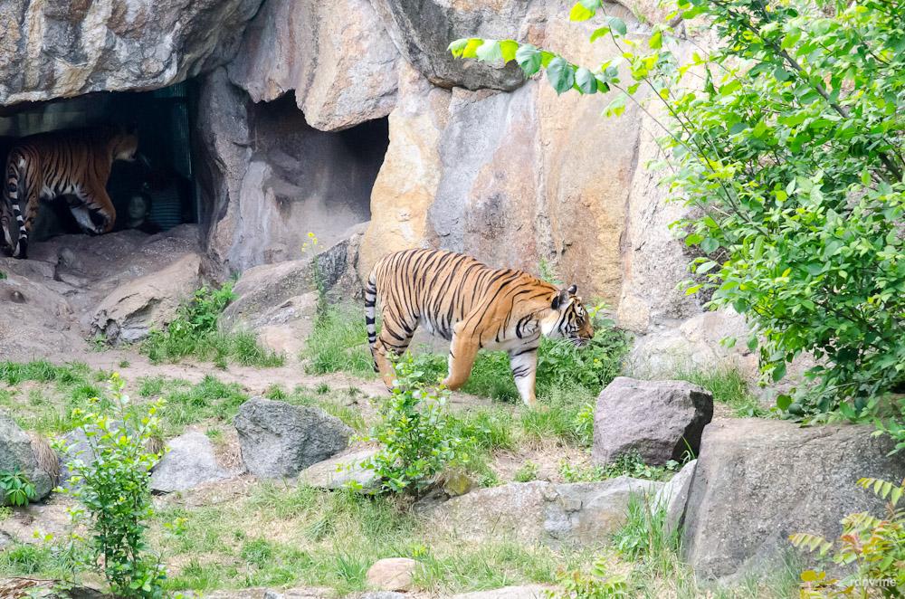 Берлинский зоопарк