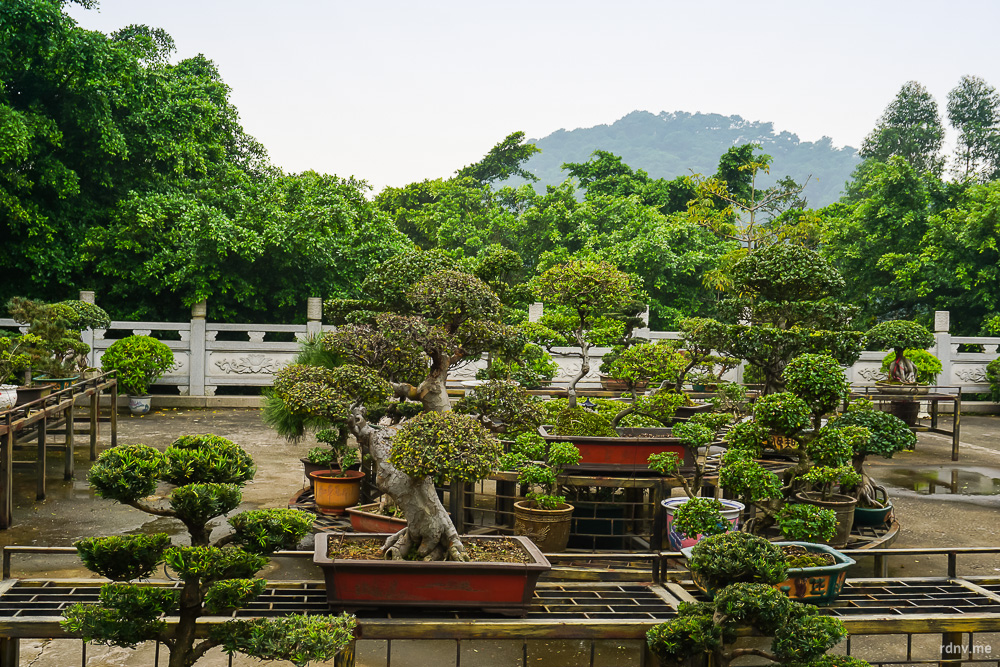 Сад пэньцзин у храма Наньхай Гуаньинь на горе Сицзяо